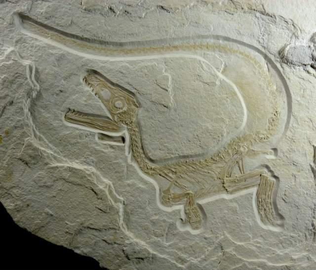 Raub-Dinosaurier